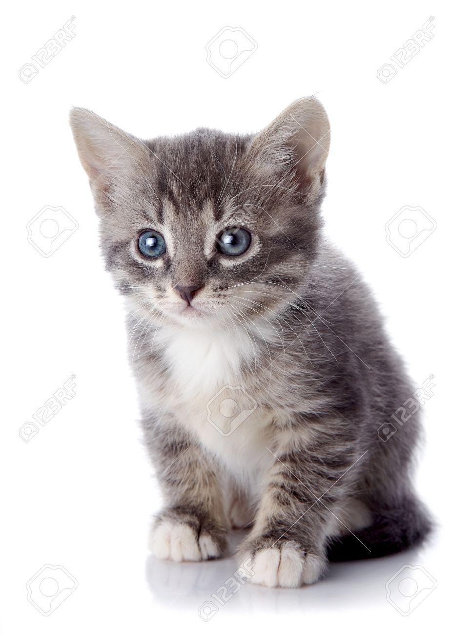 Gray Striped Kitten Striped Kitten With Blue Eyes Kitten