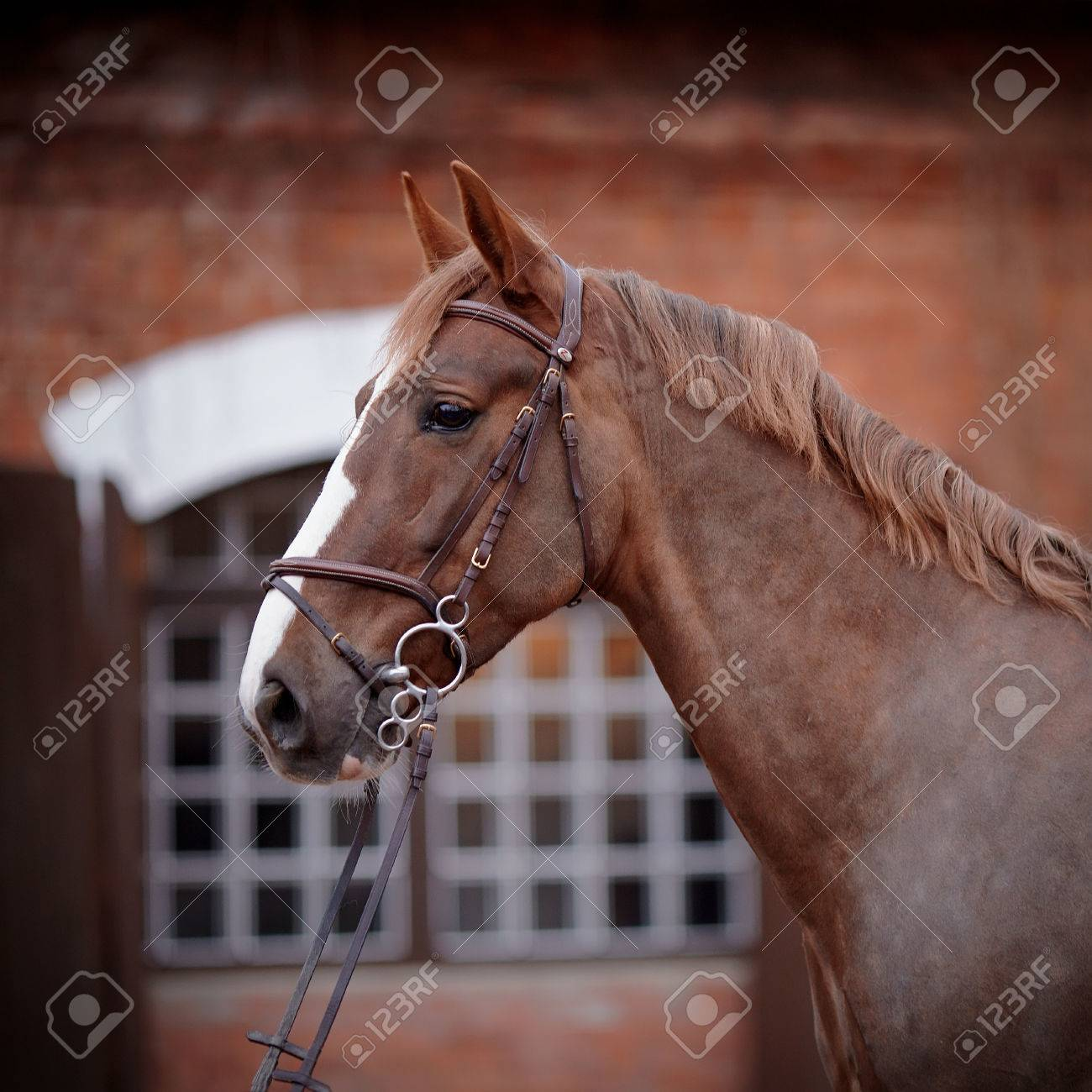 Red stallion. Portrait of a red horse. Thoroughbred horse. Beautiful horse. Sports horse. Standard-Bild - 27908470