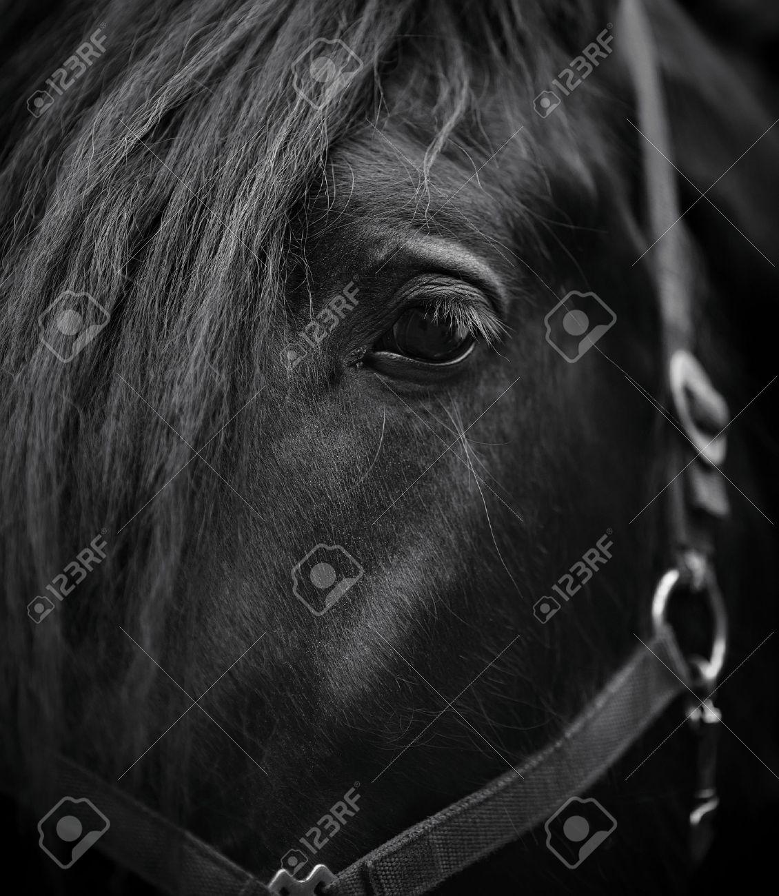 Eye of a horse. Muzzle of a horse. Stallion. Portrait of a horse. Thoroughbred horse. Beautiful horse. Standard-Bild - 28499955