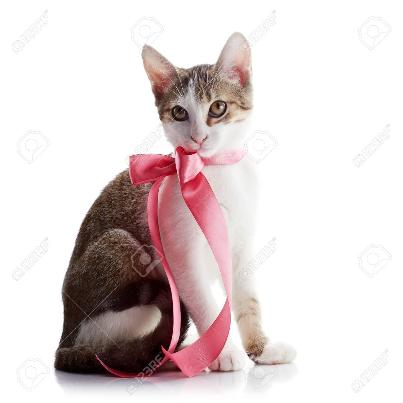 El Gatito Con Una Cinta Rosa. Multi-color Pequeño Gatito. Gatito En ...
