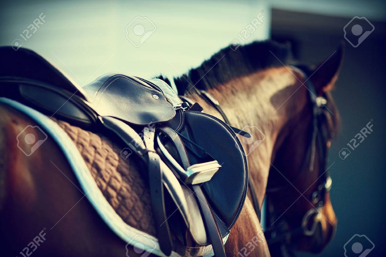 Saddle with stirrups on a back of a horse Standard-Bild - 30153302