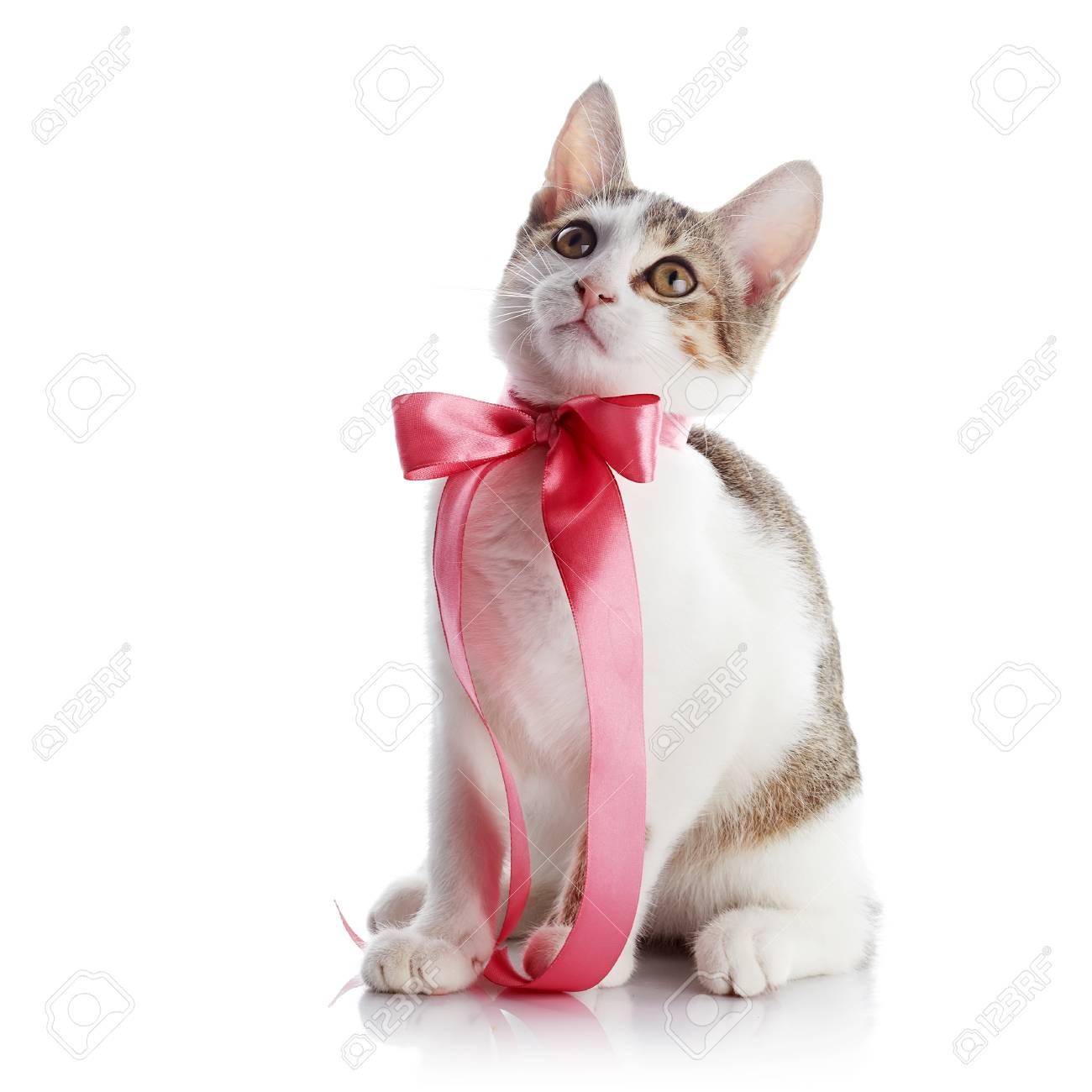 Gatito Con Un Arco. El Gatito Con Una Cinta Rosa. Multi-color ...