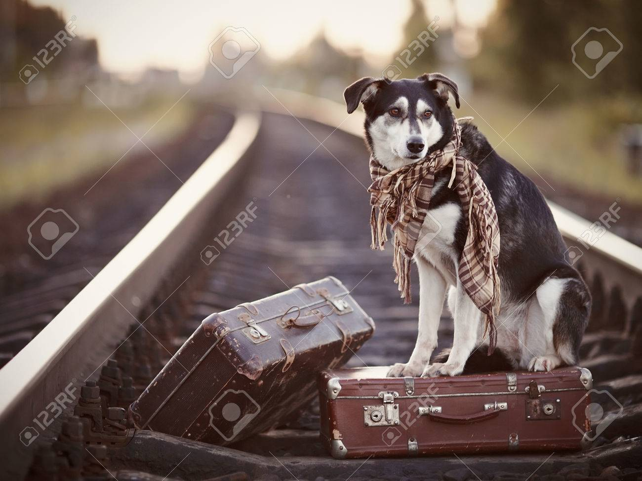 Dog on rails with suitcases. The dog looks for the house. The dog waits for the owner. The lost dog. Mongrel on the road. Dog on rails. Dog with suitcases. Not purebred dog on the road. Traveler. Vagrant dog. Tramp. Standard-Bild - 30830156