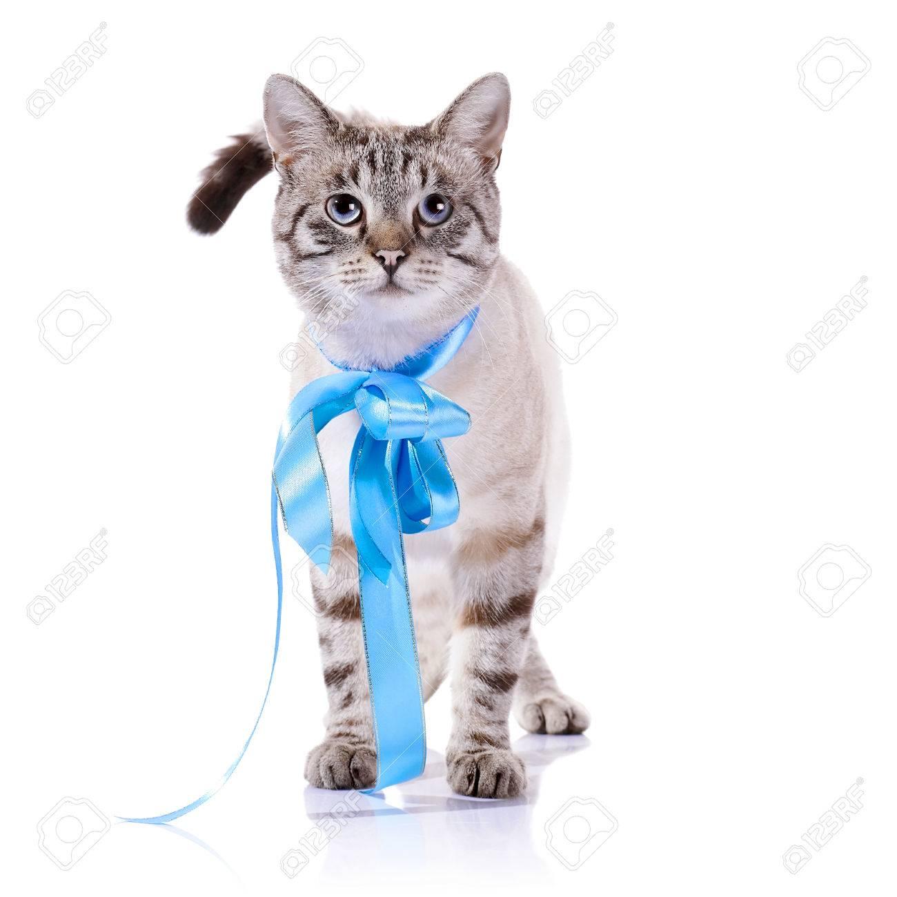 """Résultat de recherche d'images pour """"les bleus avec les chats"""""""