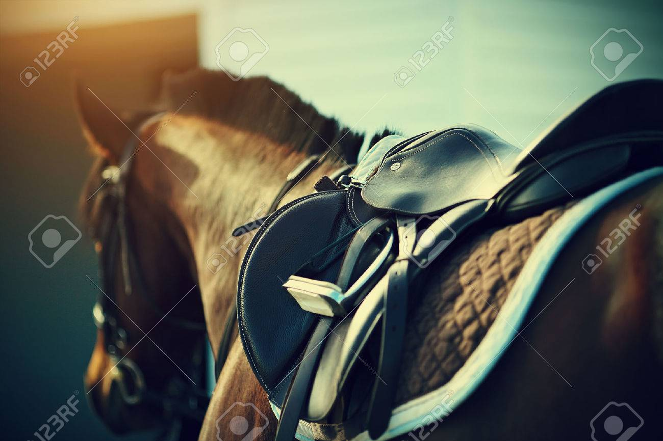 Saddle with stirrups on a back of a sport horse Standard-Bild - 39305255