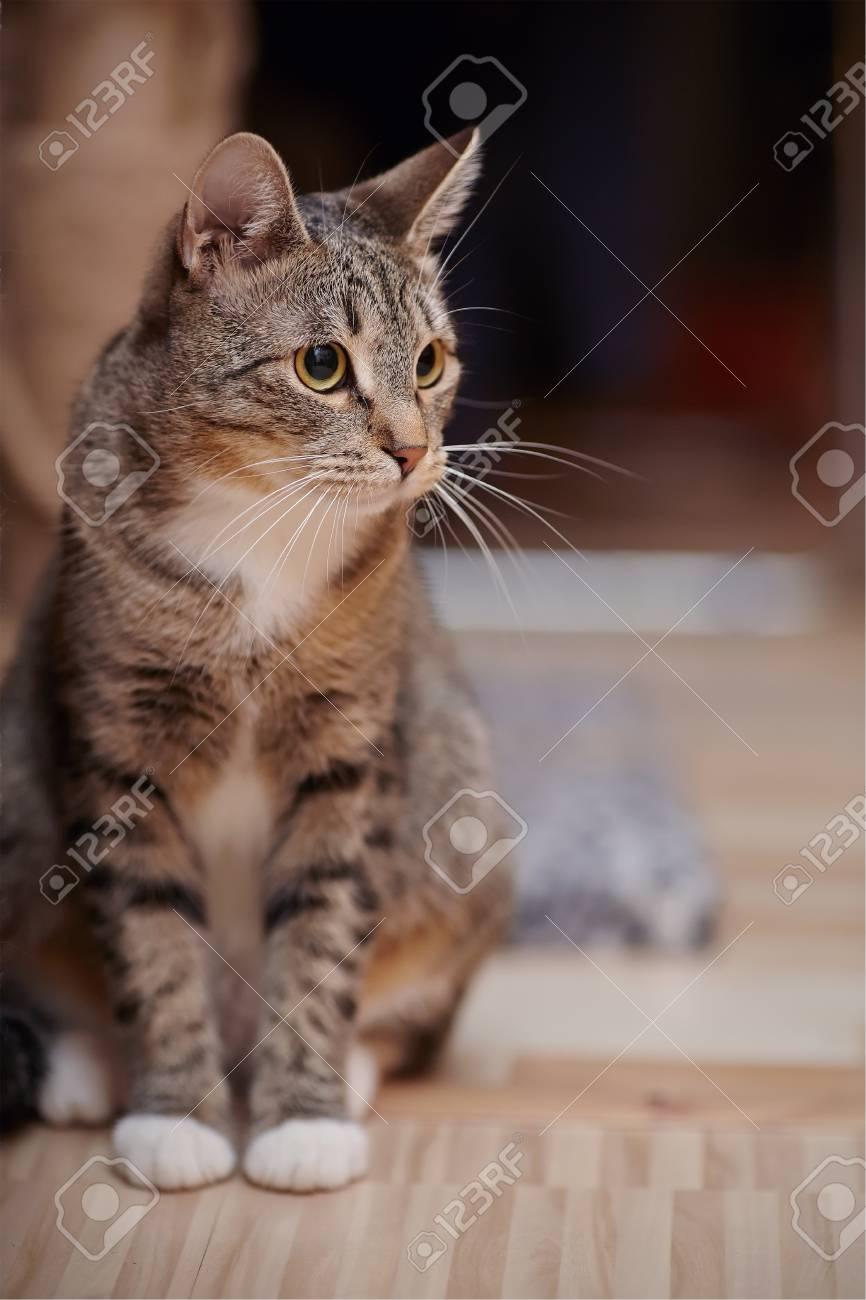 """Résultat de recherche d'images pour """"image de de chates avec des réures grises"""""""