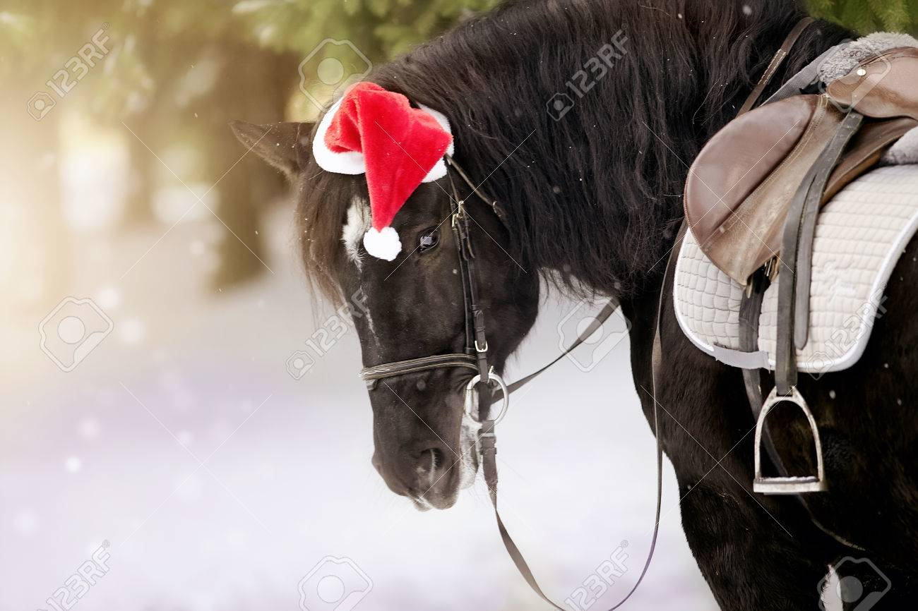 Portrait of the saddled black horse in a cap in a a red Santa Claus hat  Stock 5d8877c02049