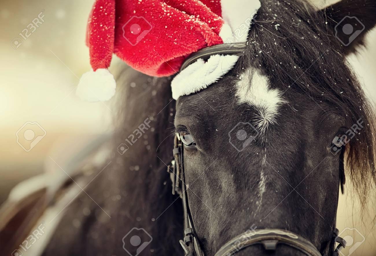 Portrait of a black horse in a a red Santa Claus hat Standard-Bild - 89250279