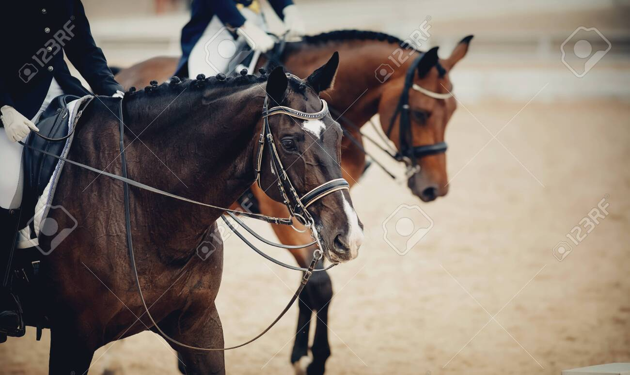 Equestrian sport. Portrait sports brown stallion in the double bridle. Dressage of horses in the arena. - 131057783