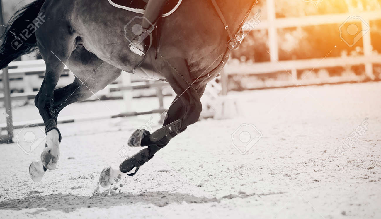 Equestrian sport. Galloping horse. Legs of a galloping horse close-up. Dressage of horses in the arena. The leg of the rider in the stirrup, riding on a horse. Overcome obstacles. Jumping competition. - 155075695