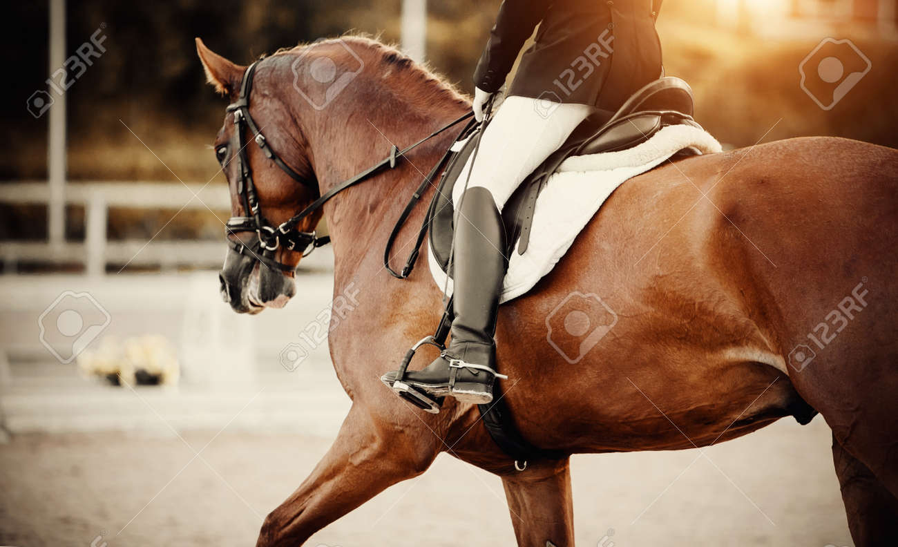 Equestrian sport.The leg of the rider in the stirrup, riding on a red horse. Dressage of horse in the arena. Dressage horse galloping with rider. Horseback riding. - 158679835