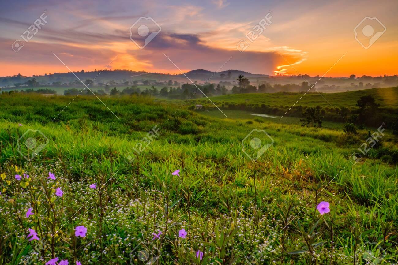 Wonderful Dairy Farm sunrise landscape with blooming Mexican petunia (Ruellia brittoniana) flowers, sunrise scenery, colorful scene, and beauty farm. - 122272026
