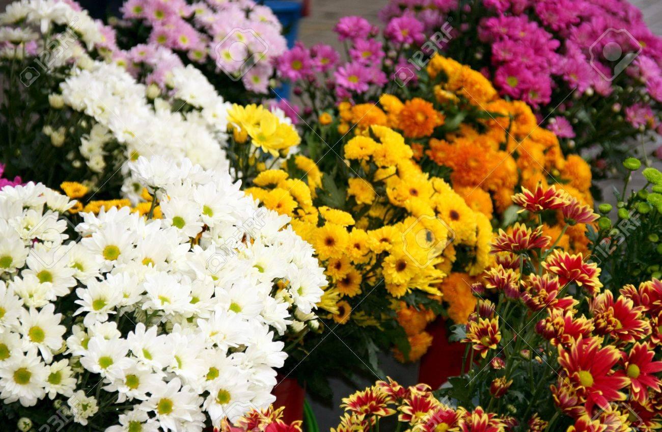 Buckets Of Colorful Flowers For Sale In Flower Shop Near Bintulu