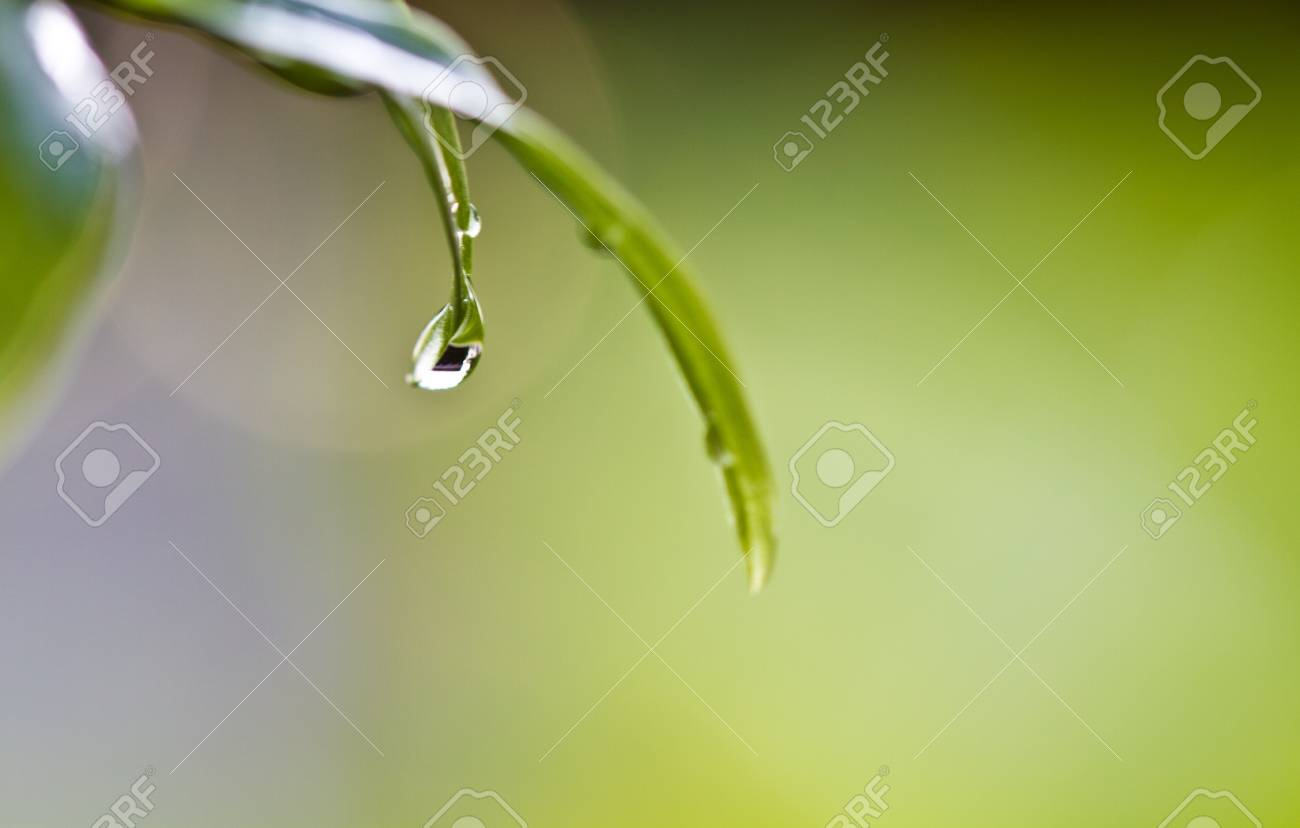 rain drop accumulating at the tip of green leaf Stock Photo - 10690394
