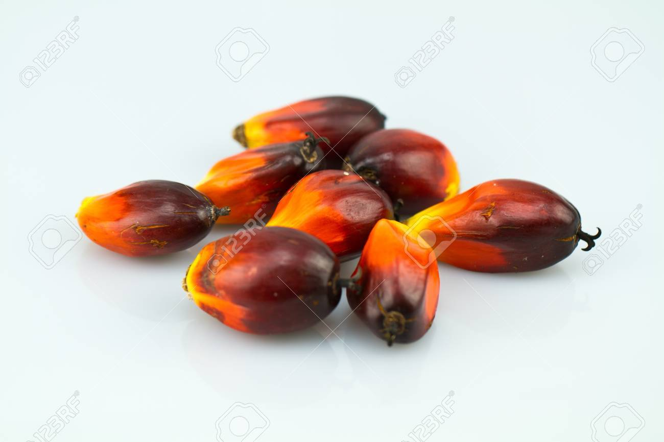a bunch of oil palm seeds on a bluish white surface Stock Photo - 11344841