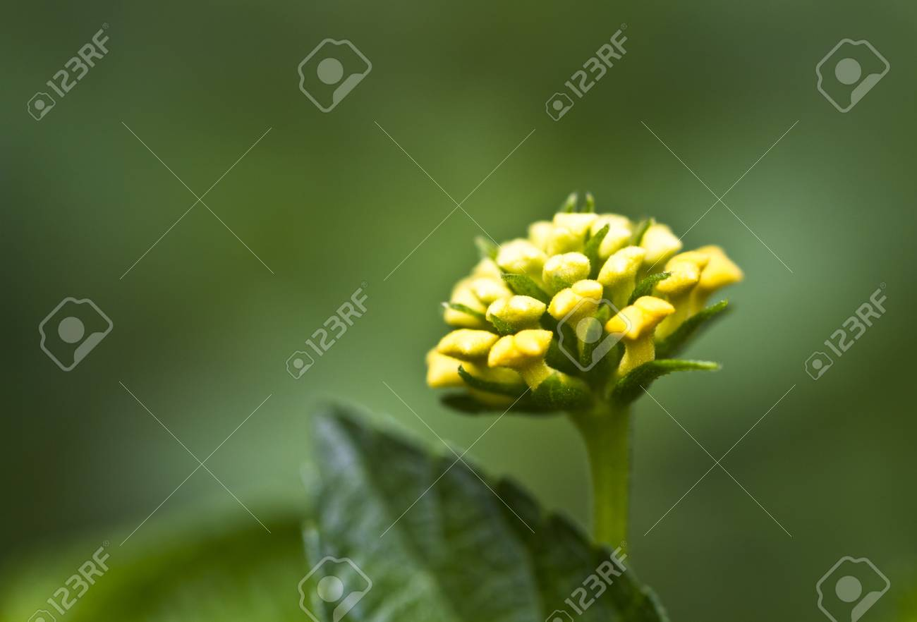 yellow flower surrounded by green background in the morning light Stock Photo - 12638636