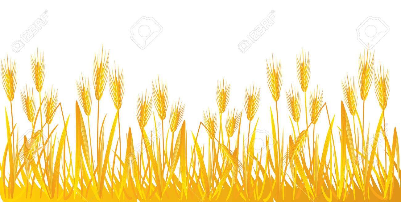 Wheat Stock Vector - 8204709