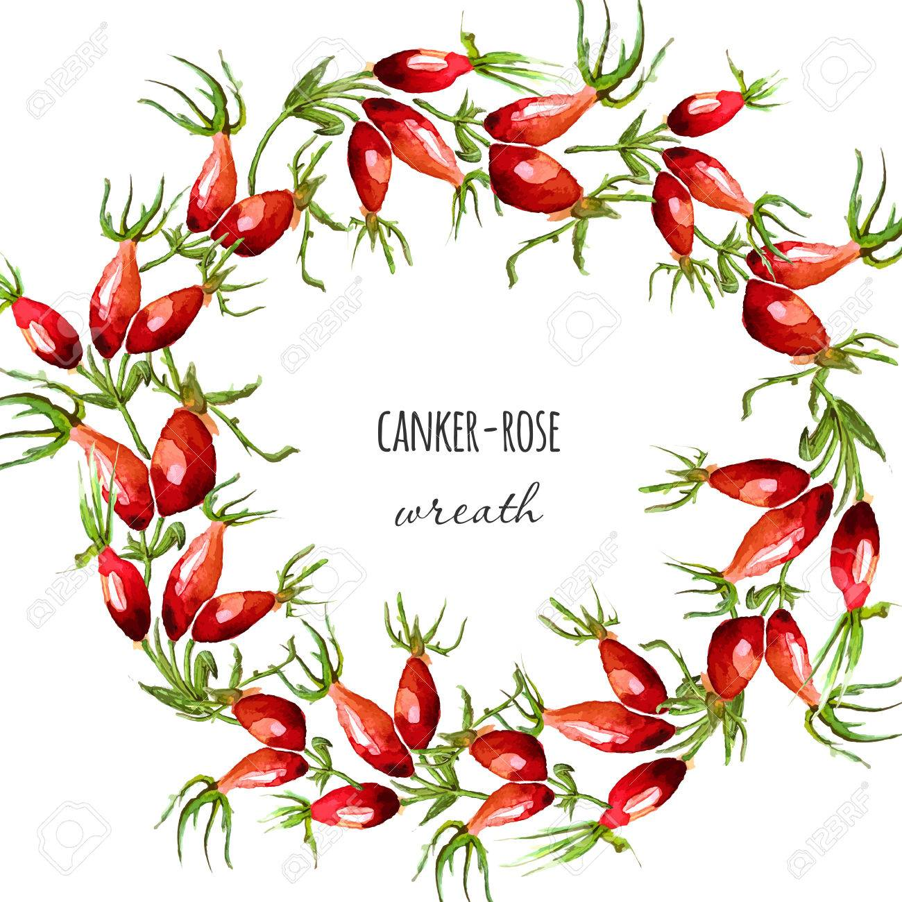 Watercolor Hand Drawn Illustrated Canker Rose Wreath Fall Harvest