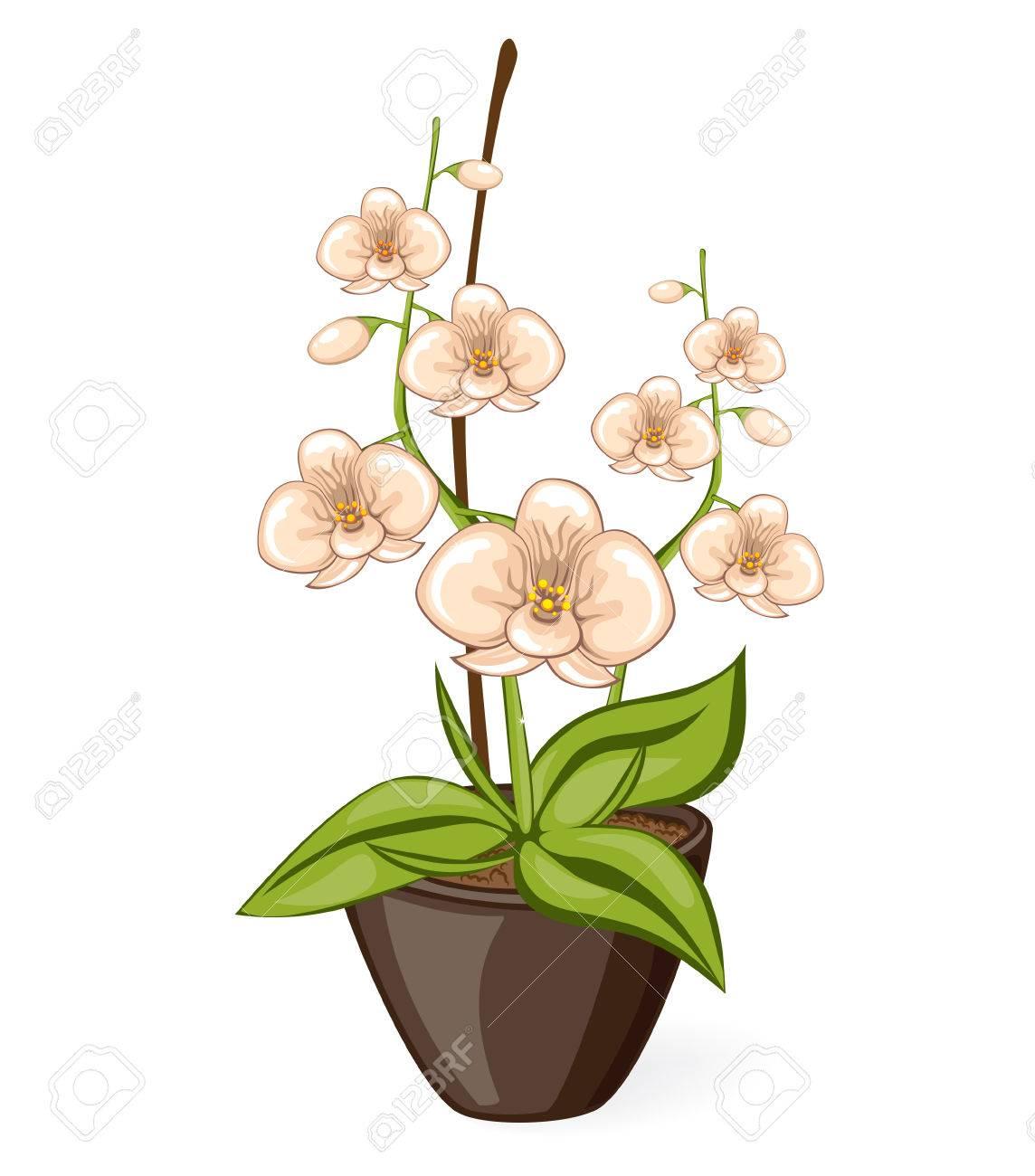 Dessin Fleur D Orchidée dessin animé blanc phalaenpsis fleur d'orchidée dans le pot. vector