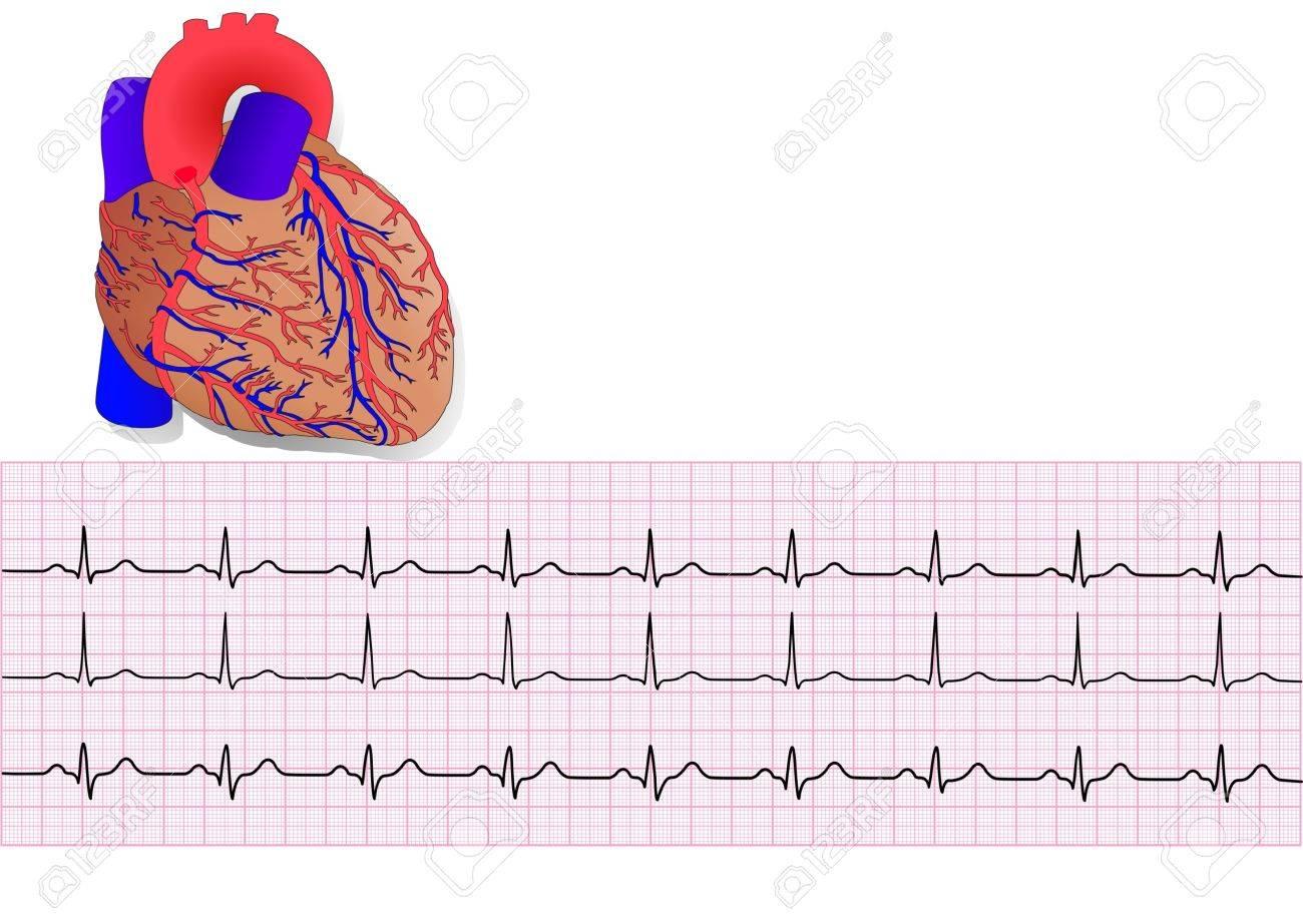 human heart and electrocardiogram - 6732349