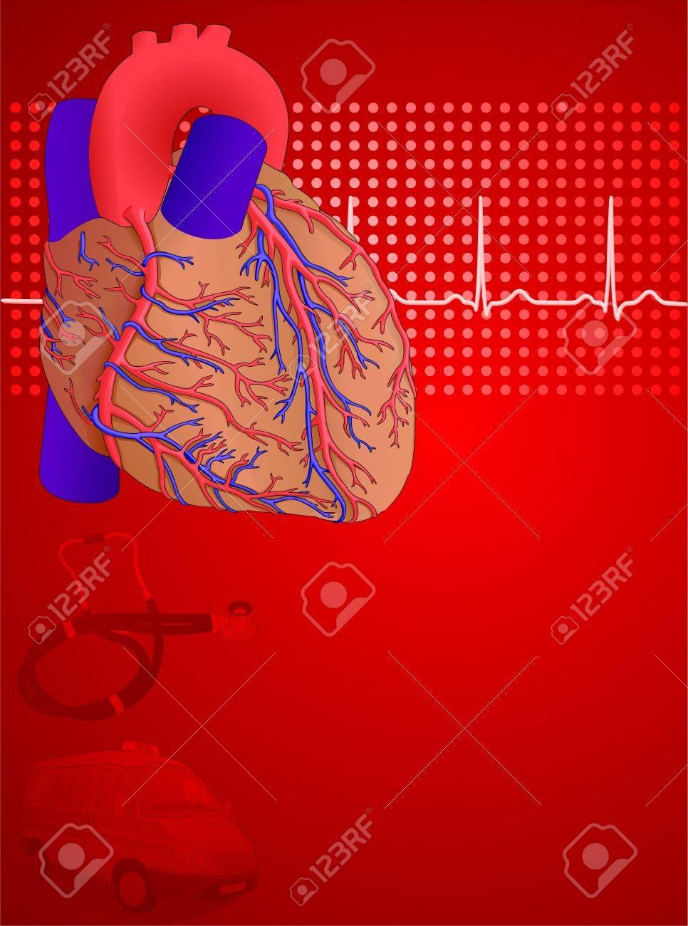 Anatomía Del Corazón Humano Y Fondo De Fisiología Rojo, Ilustración ...