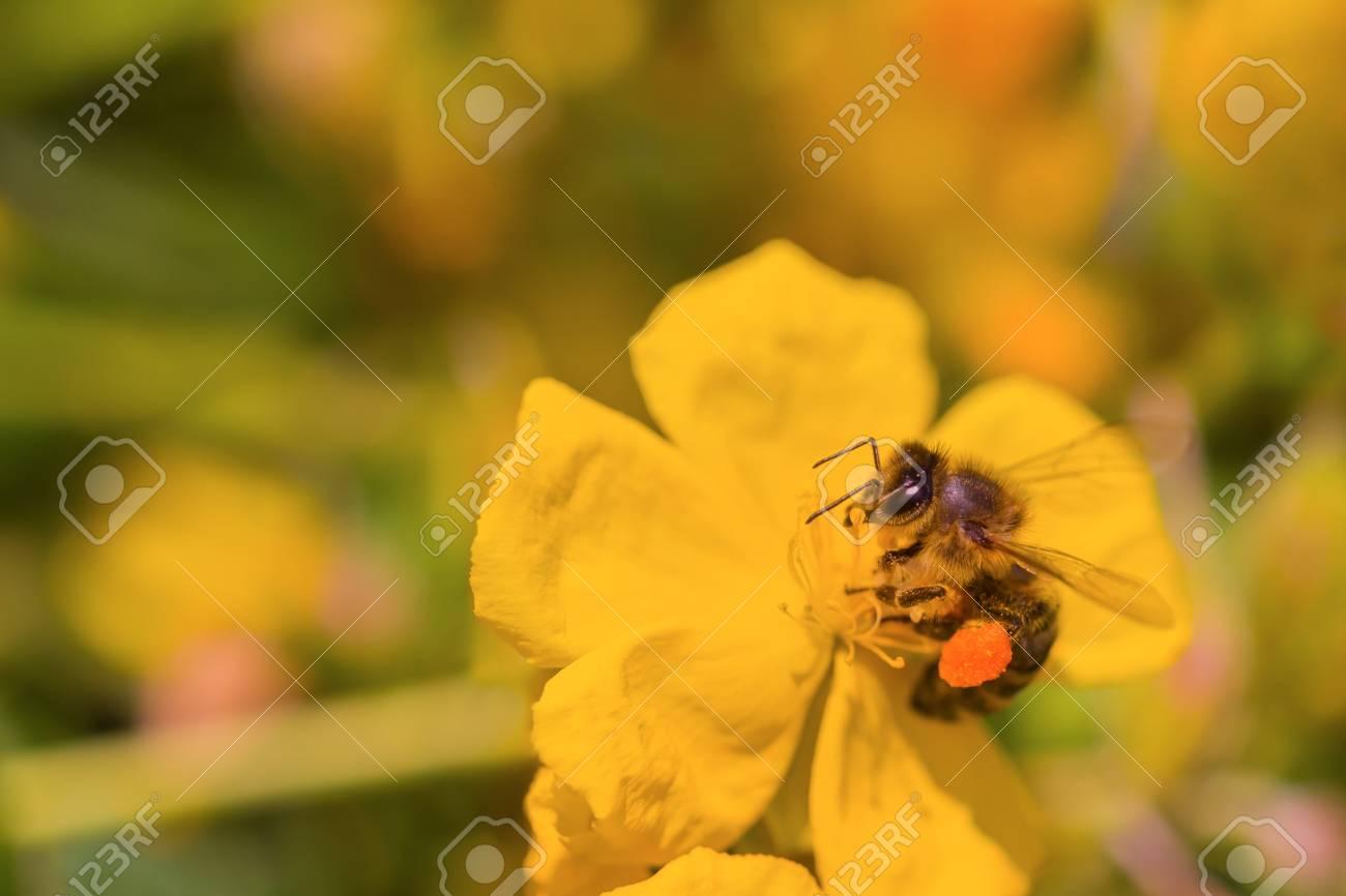 Blumen mit viel nektar