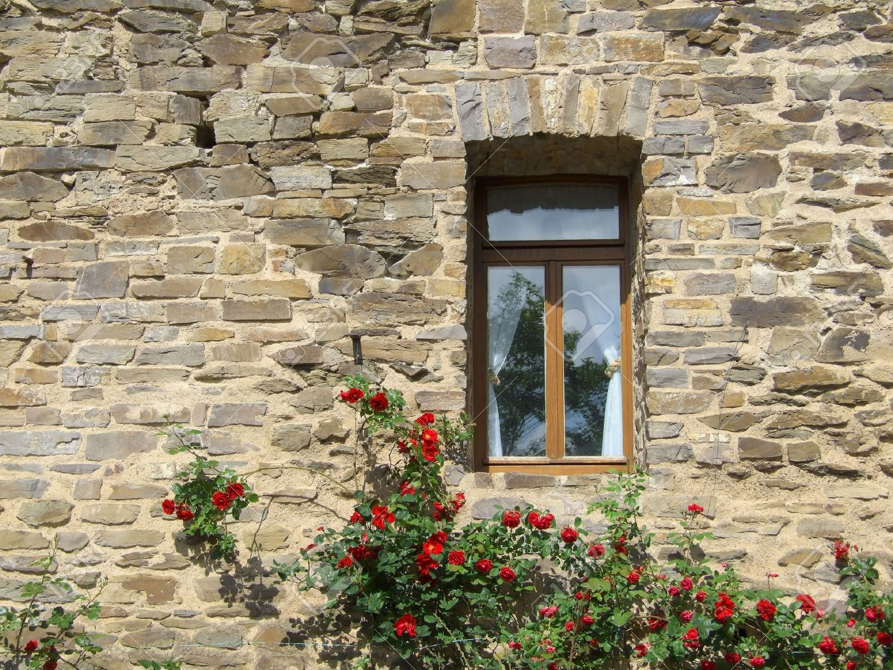 Image result for Pic of rose-bush under a window.