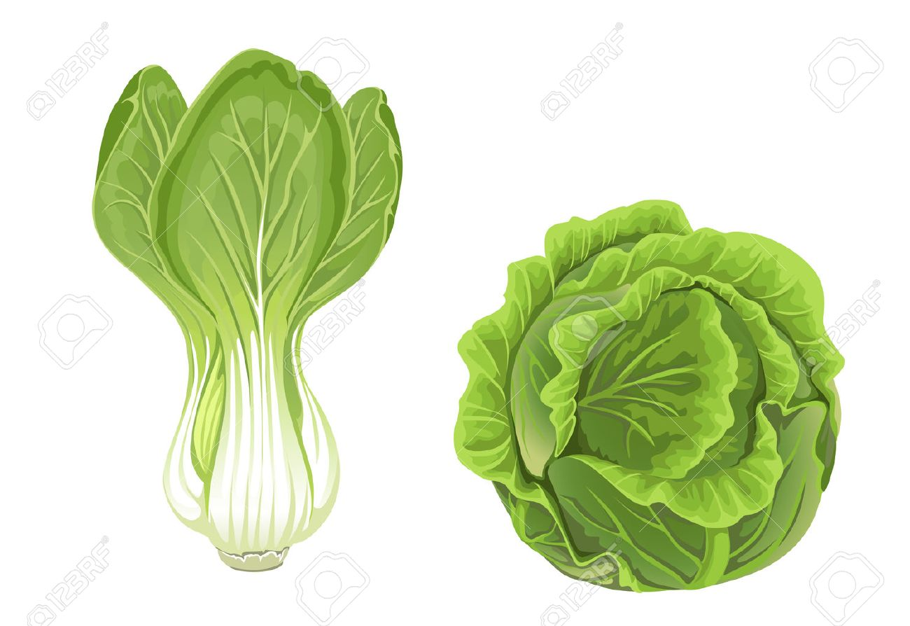 head of green cabbage and lettuce royalty free cliparts, vectors, and stock  illustration. image 23149498.  123rf