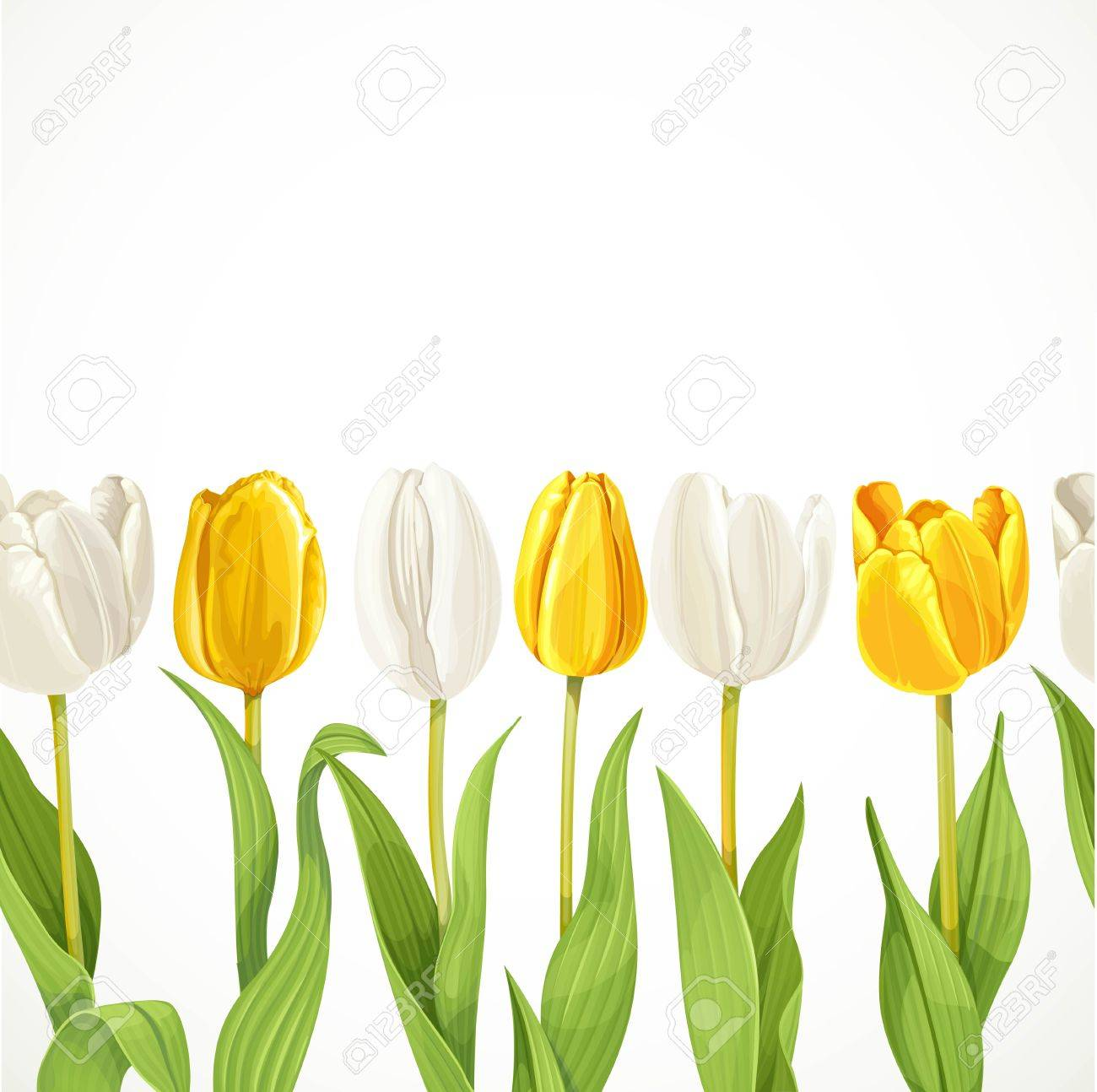 Vector Yellow And White Flowers Tulips Seamless Background Royalty