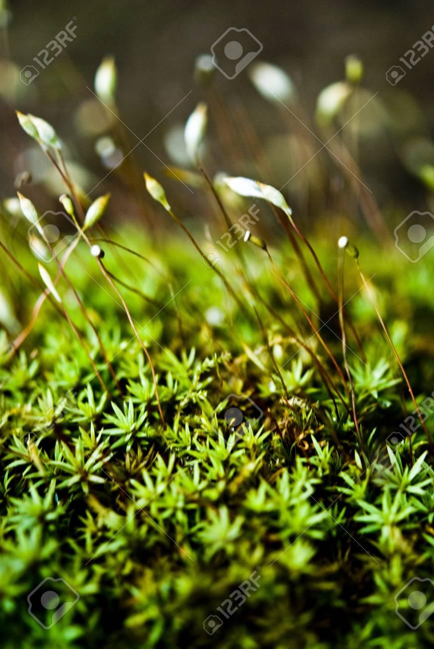 Fractal Plant Close Up Stock Photo - 14508652