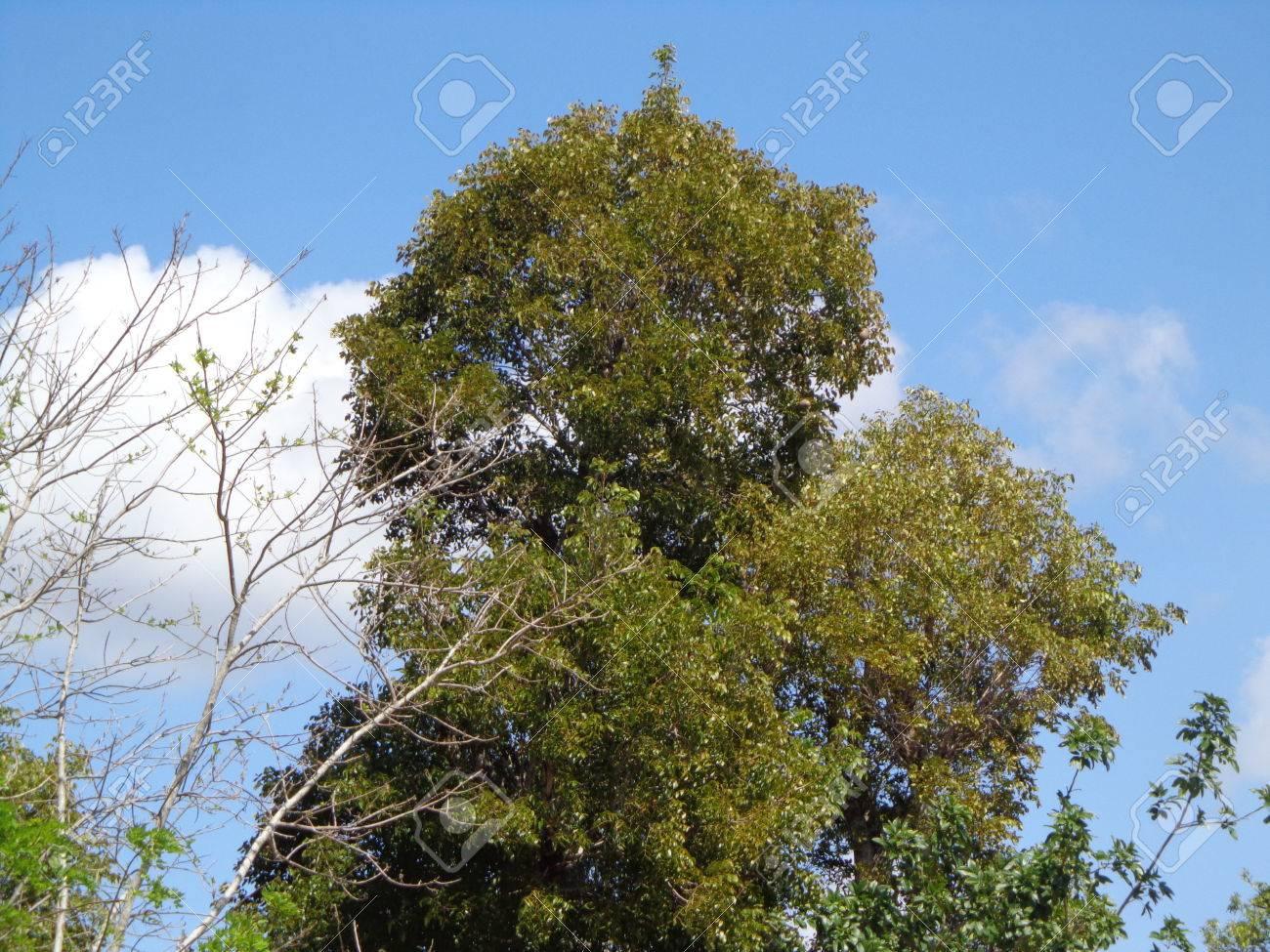 natürliche landschaft mit üppigen baum oben auf den baum blätter