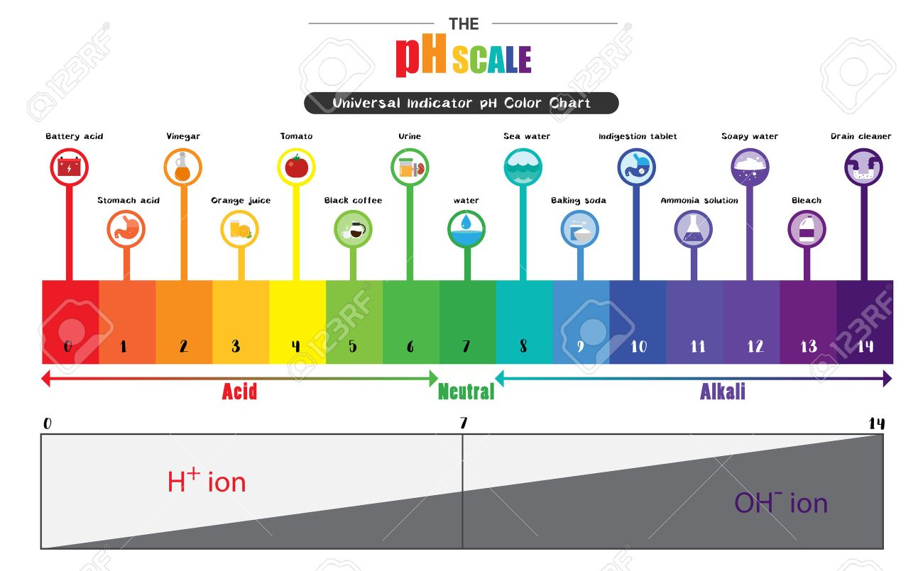 The PH Scale Universal Indicator PH Color Chart Diagram Acidic ... for Ph Scale Acids And Bases  53kxo