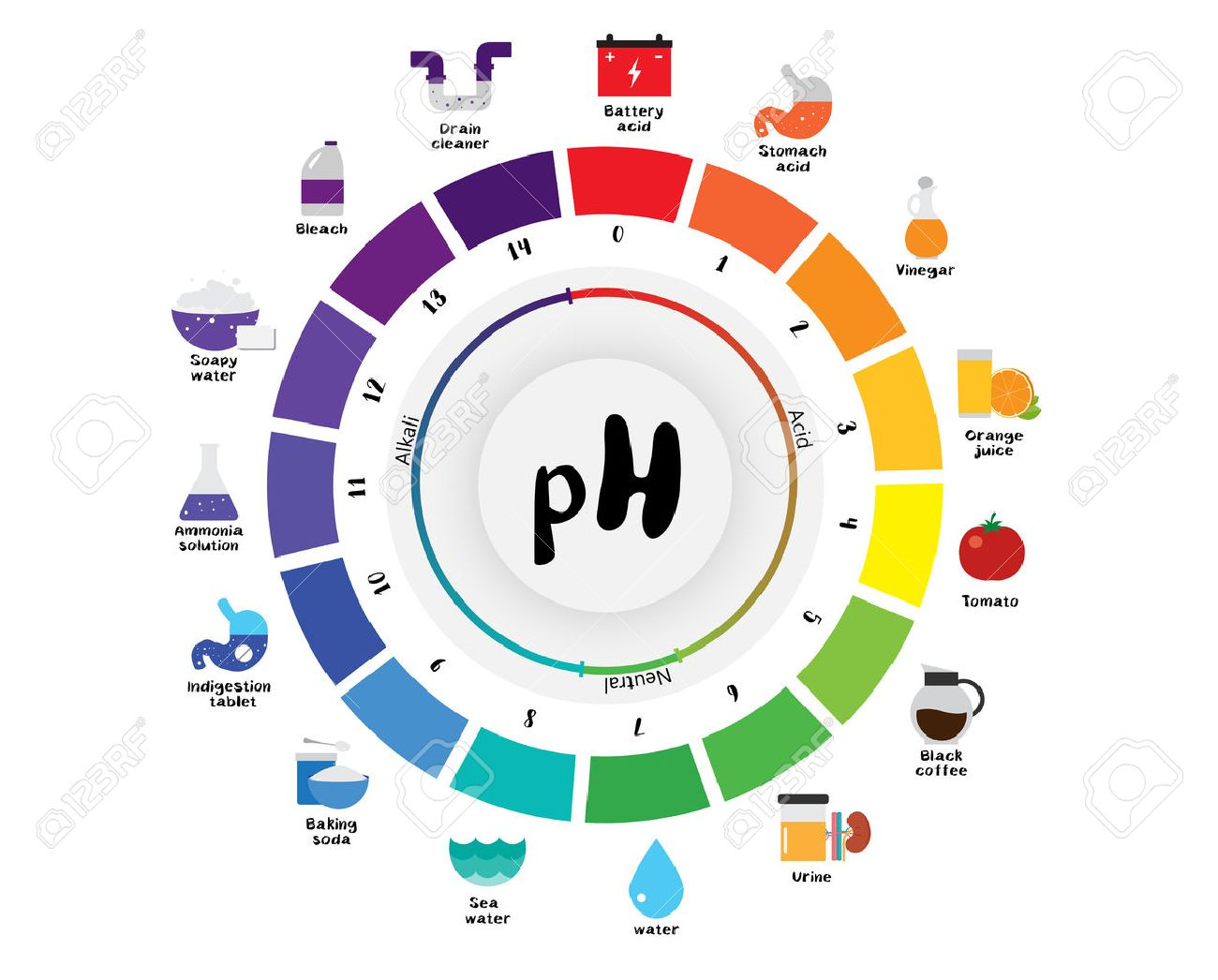 The ph scale universal indicator ph color chart diagram acidic the ph scale universal indicator ph color chart diagram acidic alkaline values common substances vector illustration nvjuhfo Choice Image