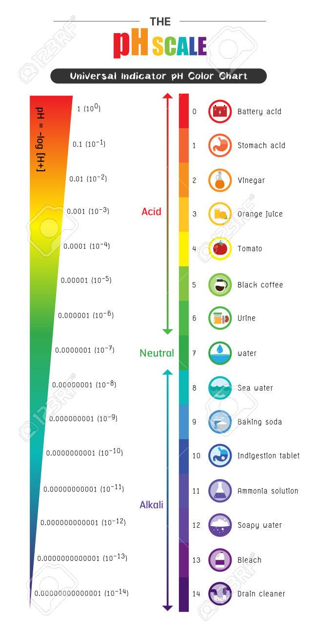 The ph scale universal indicator ph color chart diagram acidic the ph scale universal indicator ph color chart diagram acidic alkaline values common substances vector illustration nvjuhfo Images