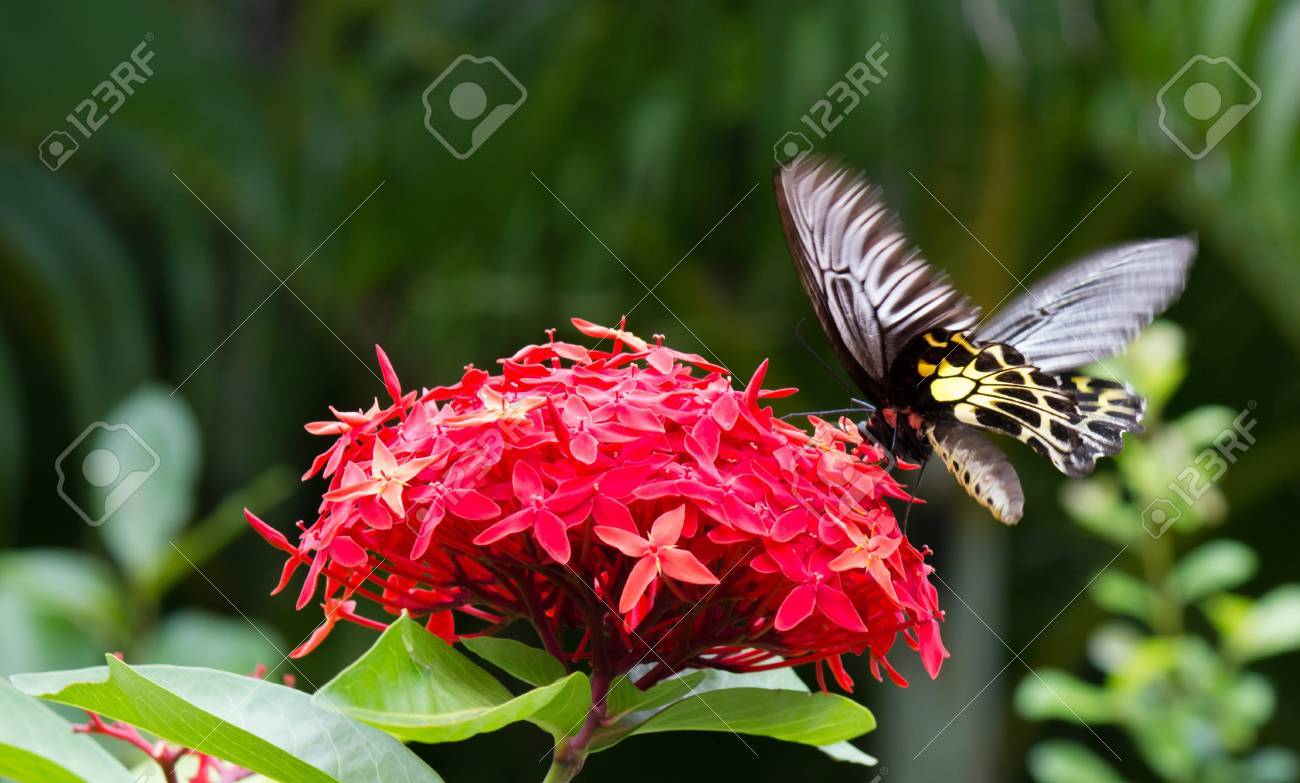 nature,  insect,  background,  summer,  beauty,  beautiful,  white,  spring Stock Photo - 15618903
