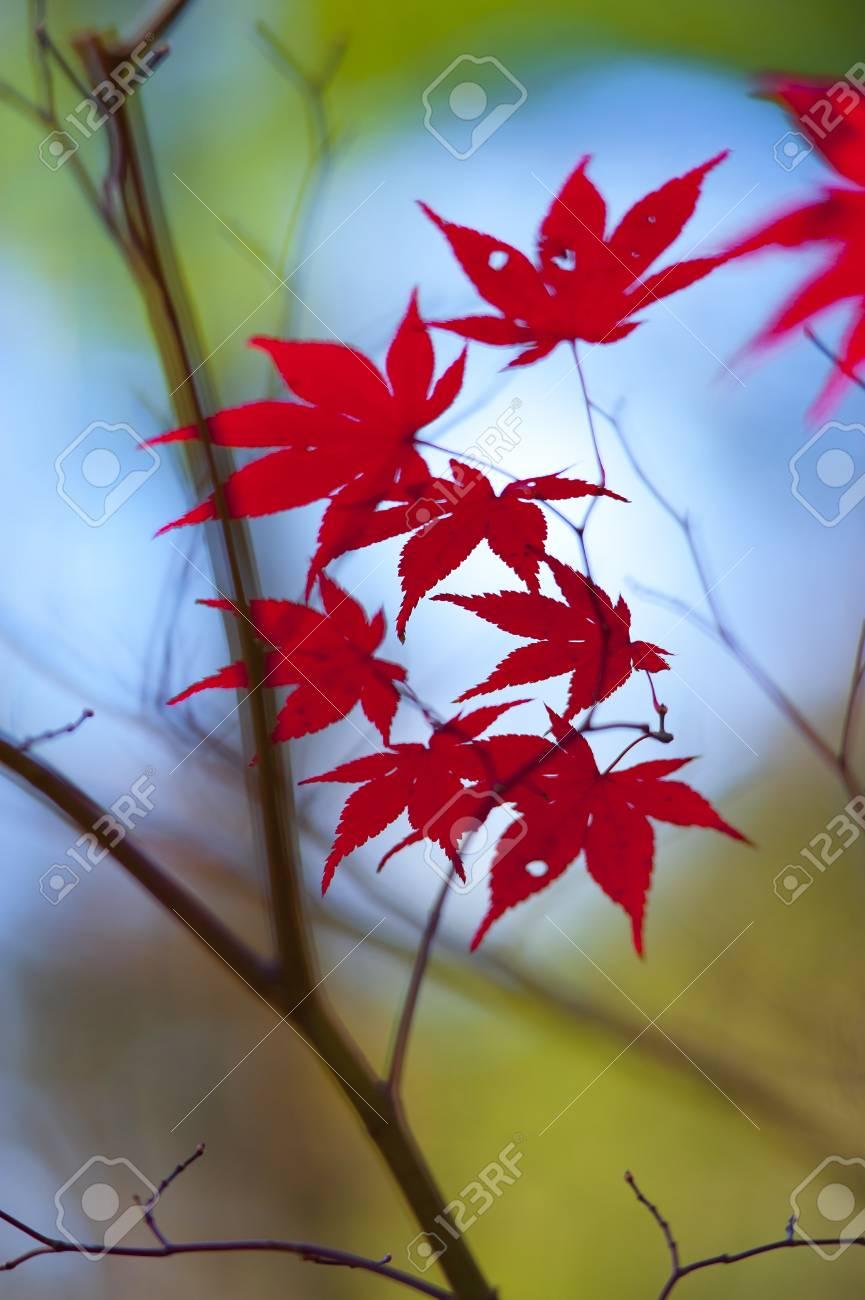 Fall foliage close up Stock Photo - 16682193
