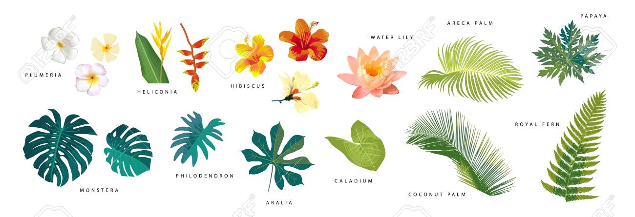 Set Of Vector Realistic Tropical Leaves And Flowers With Names Royalty Free Cliparts Vectors And Stock Illustration Image 149534547 Tropical and subtropical moist forests (tsmf) are characterized by low variability in annual temperature and high levels of rainfall (>200 centimeter annually). 123rf com