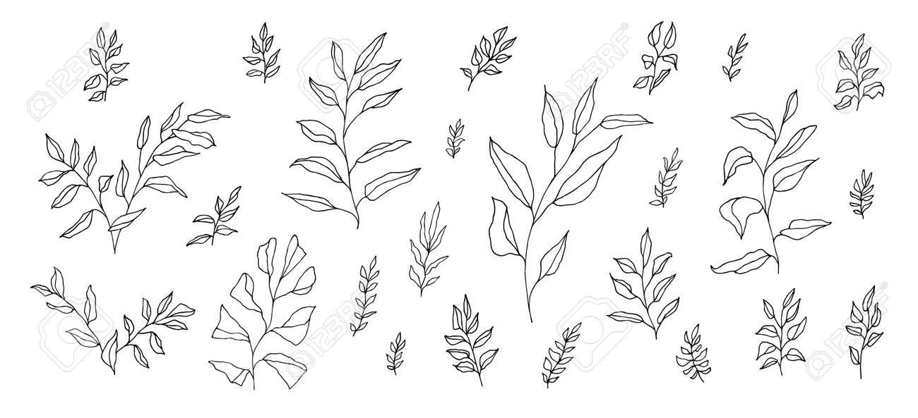 Boho aesthetic botanical set of black linear hand-drawn twigs isolated on white. Bohemian style artistic branches for wedding invitation. Vintage elegant doodle herb drawing. Foliage decoration - 173384132