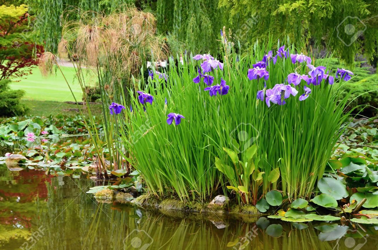 100 Remarquable Suggestions Plantes Et Fleurs De Bassin