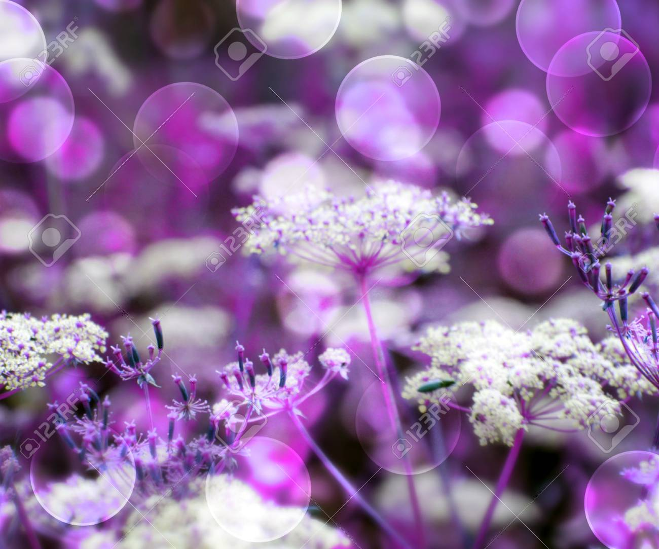 Violet Wild Flowers Background Stock Photo - 17075341