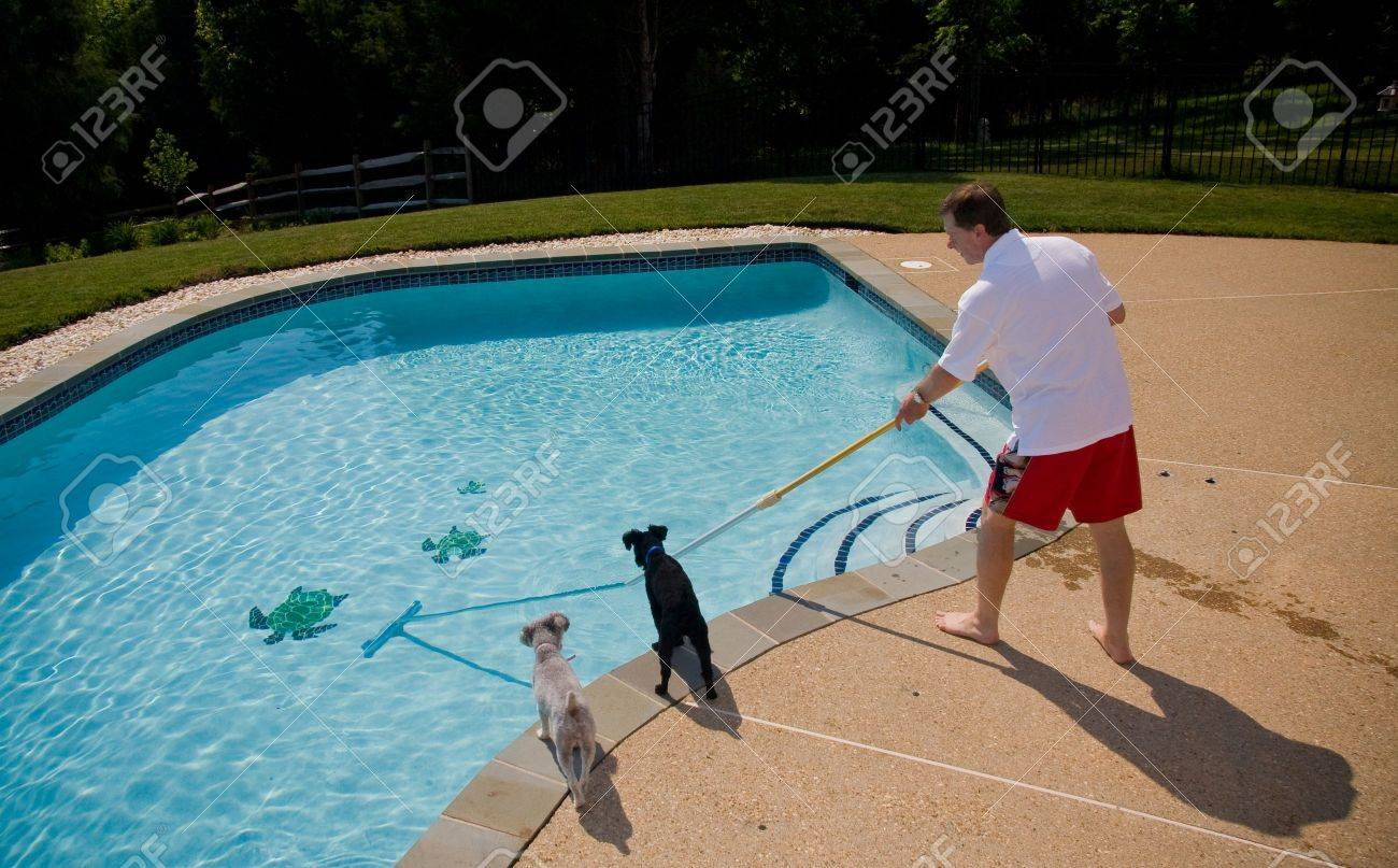 Middle aged man brushing swimming pool closely watched by two small dogs Stock Photo - 3213599