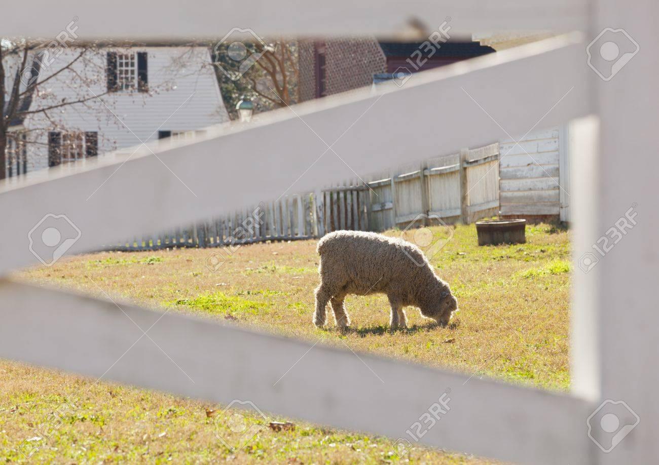 Beleuchtete Schafe Im Garten Von Hausern Durch Weissen Zaun Genommen