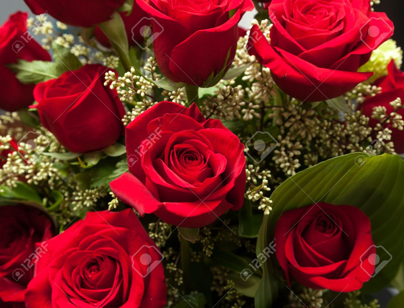 detailed close shot of velvet red roses in romantic valentines, Beautiful flower