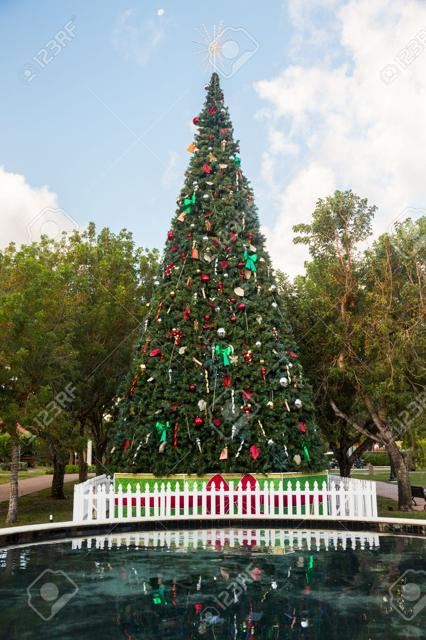 How to decorate tall outdoor christmas tree - Large Tall Christmas Tree In Exterior Park In Key Biscayne Florida Decorated For Xmas Stock Photo