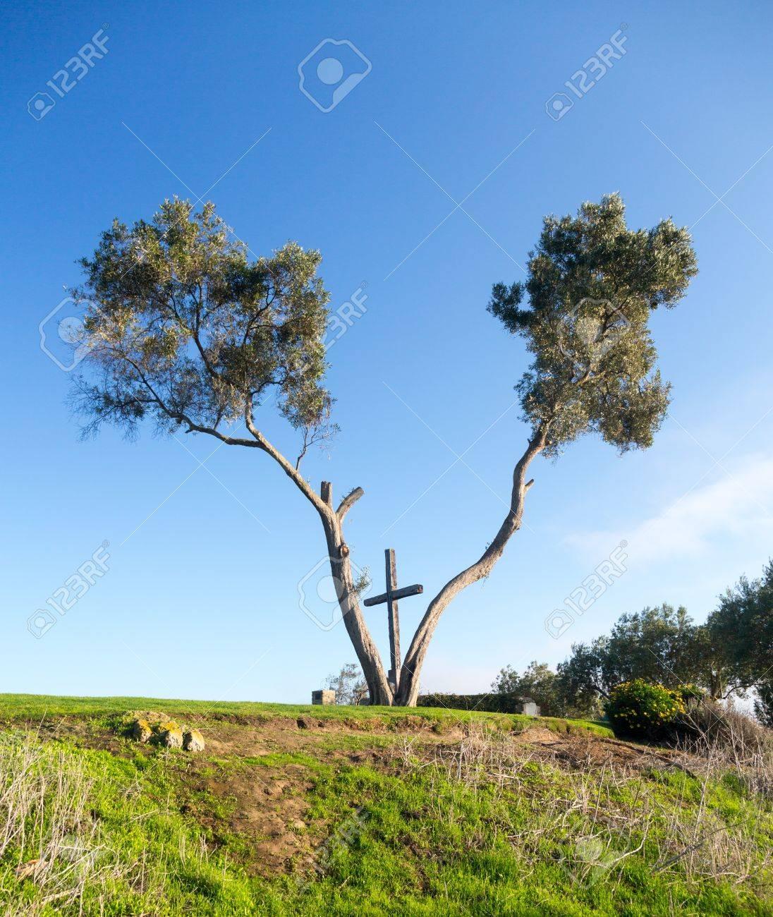 Serra Cruz En El Grant Park De Ventura California Establece Entre ...