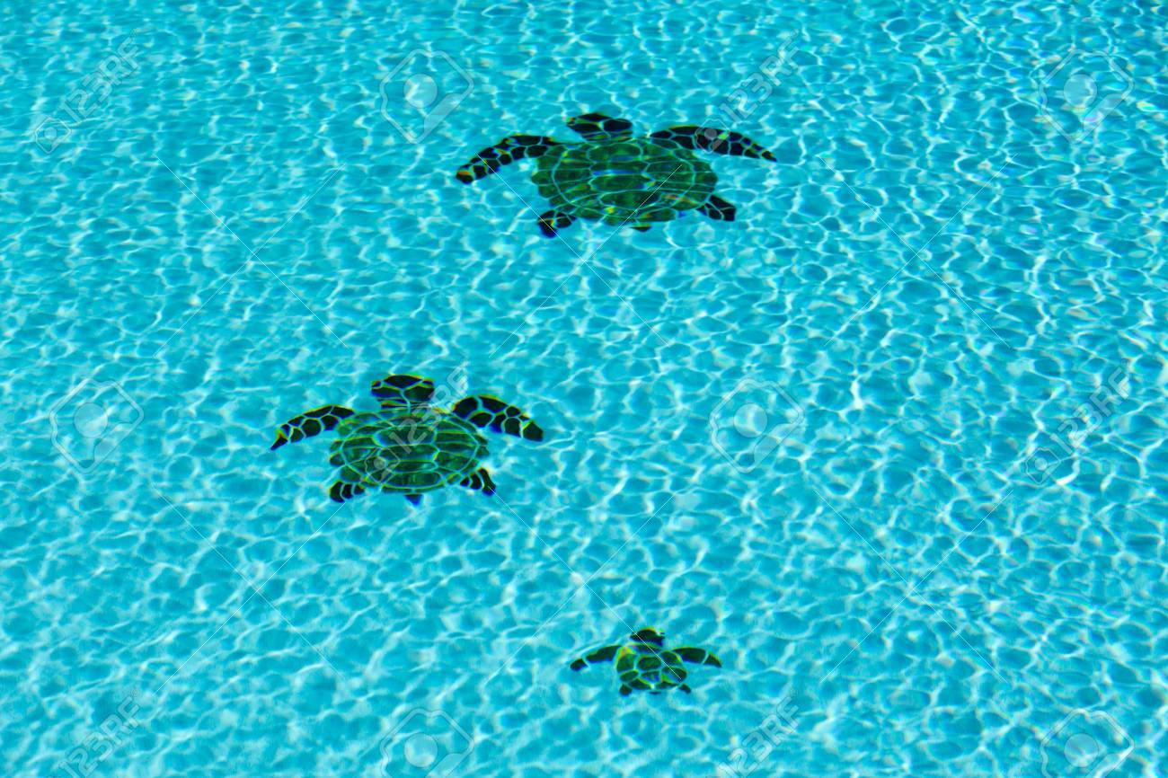Three tiled turtles on the floor of a swimming pool apparently..