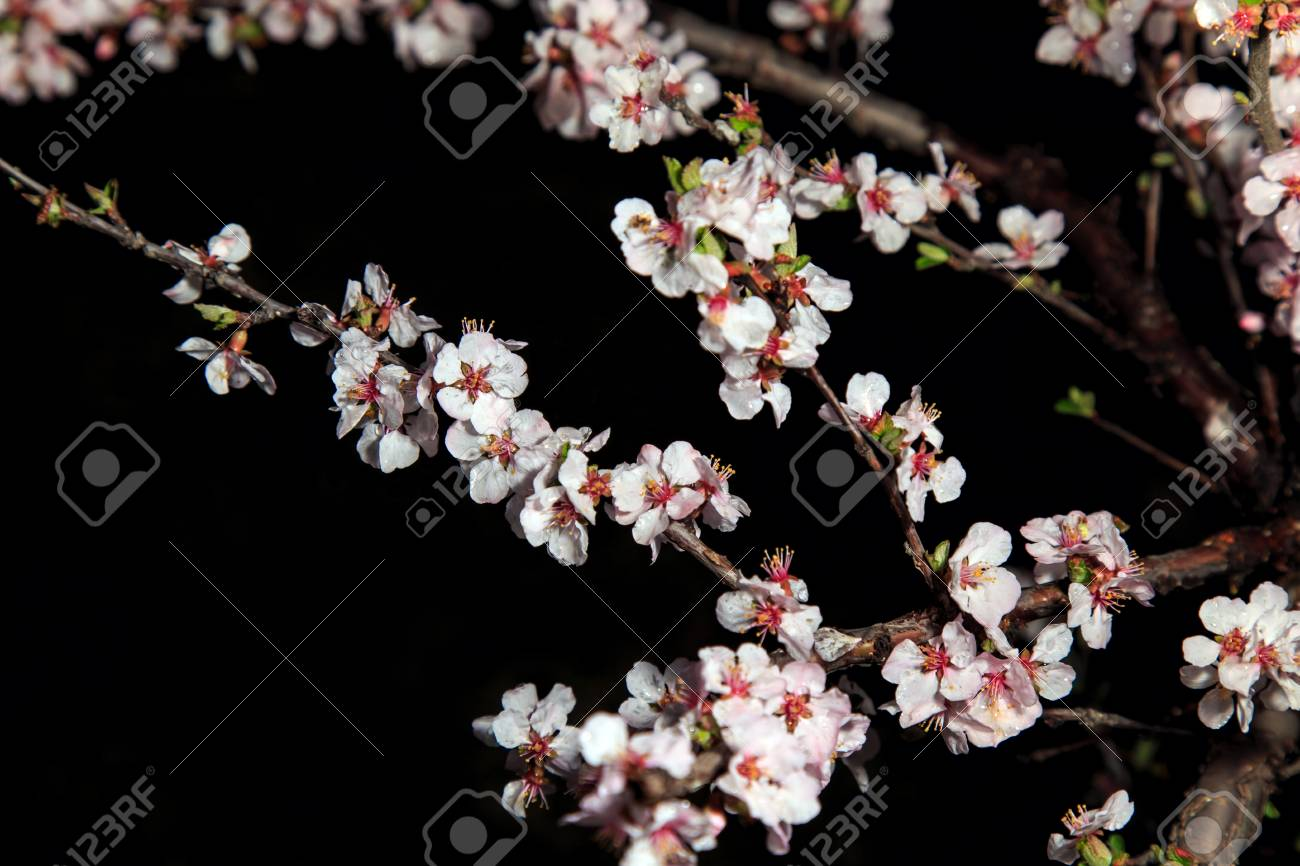 Spring Flowers In Bloom Stock Photo Picture And Royalty Free Image