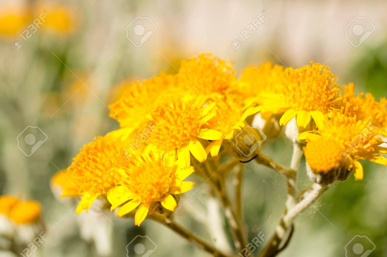 Macro shoot of the pollen on flower Stock Photo - 20493423