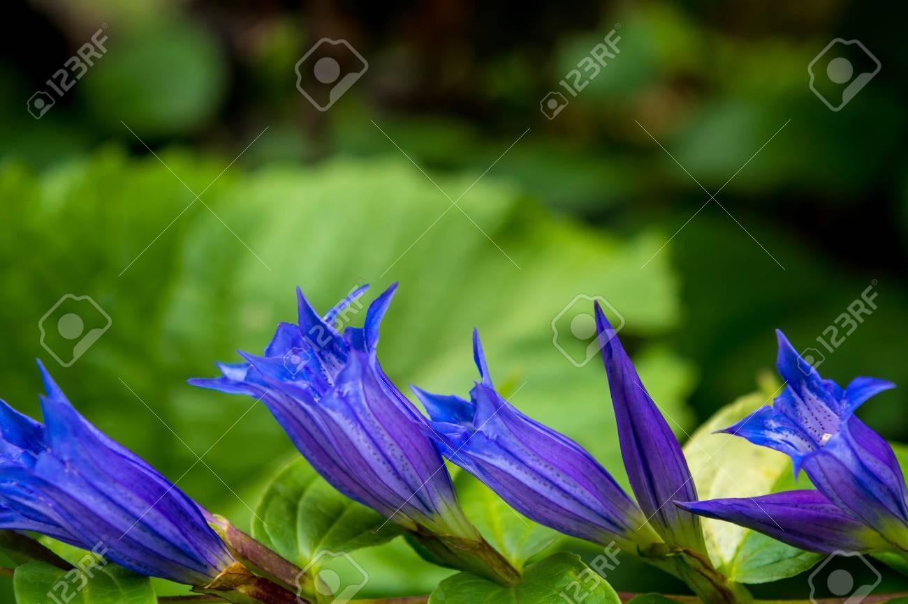 Photo De Belle Fleur Sauvage Bleu Violet Dans Les Montagnes Des