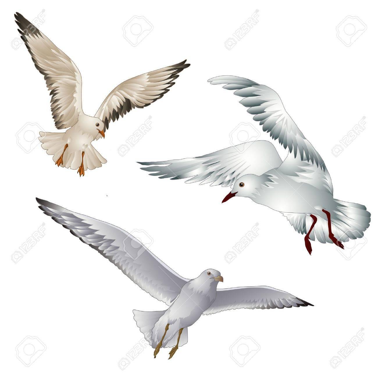 白い背景の上の鳥カモメのベクトル イラストのイラスト素材ベクタ